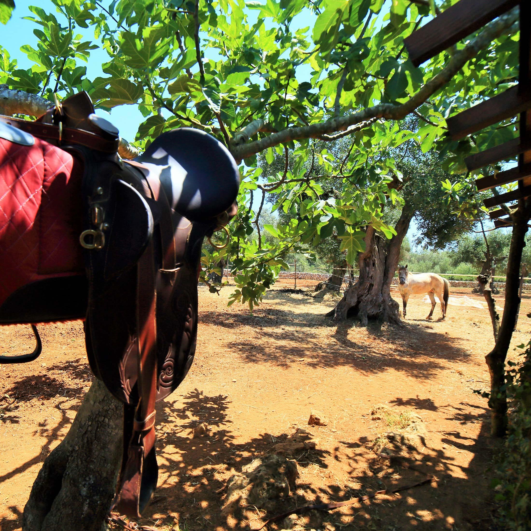 agricola-puglia-agriturismo-stalla